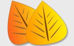 طراحی برگ های برداری در فتوشاپ
